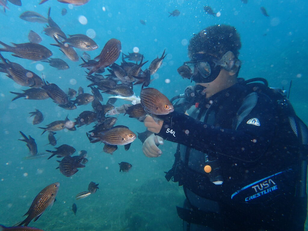 diver surrounded by many fish