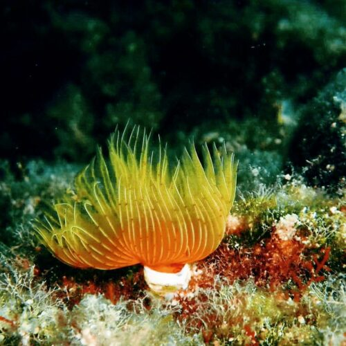 anemoni_underwater
