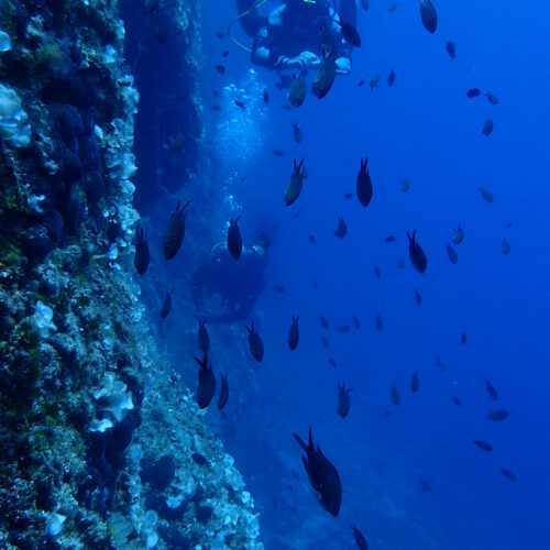 underwater_reef_fish