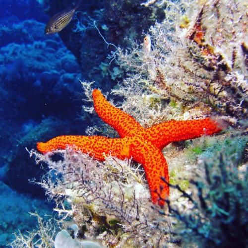 Want to explore the underwater magic creatures? Come dive with us @marathon.diversclub at Marathon Bay 🐳🐙🐚