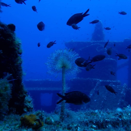 Lost treasures into the sea 💦👌⚓️🛳..Come dive with us @marathon.diversclub .#Padi #wreck #wreckdiving #marathondiversclub #scuba #scubadiving #deep #blue #shipwreck #spirograph #diving #underwater #ocean #underwaterphotography #dive #sea #travel #photography #marinelife #sealife #underwaterworld #adventure #uwphotography #scubadiver #fish #tauchen #underwaterphoto #underwaterlife